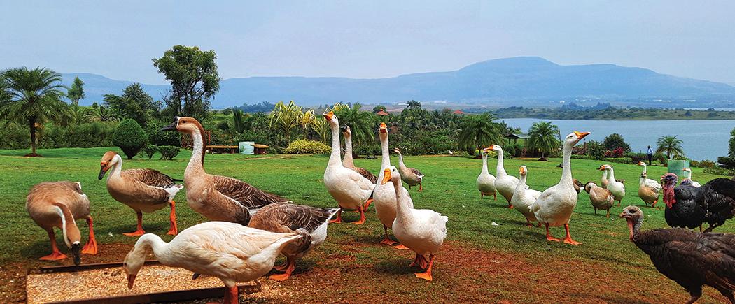birds-in-lonavala